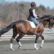 Michael Poulin, Salt Marsh Dressage 04-10-2016