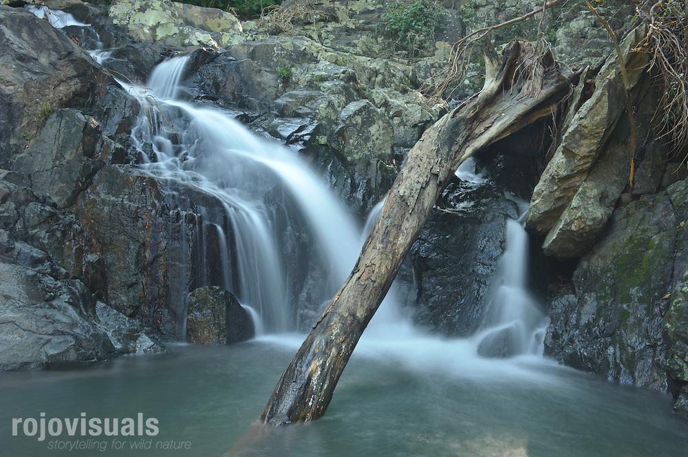 Cuando el río San Pedro y sus afluentes crecen en la temporada de lluvias, llegan a arrastrar árboles a su paso -como el que vemos en la imagen-, redefiniendo constantemente el paisaje de la región.