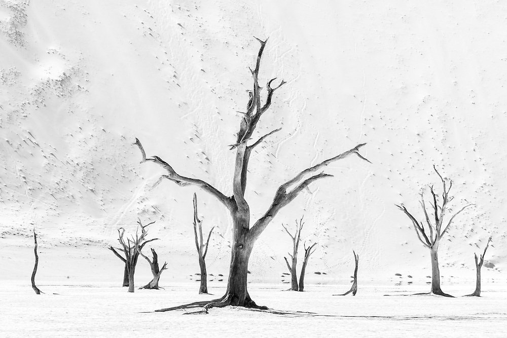 Black and white trees at Dead Vlei, Namibia.