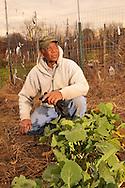 Vassar Farm.Community plots, farmers, crops.Vassar College