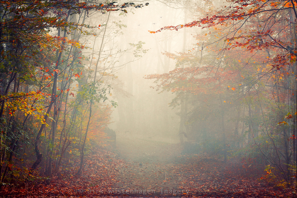 Crowes on a path on a misty November morning