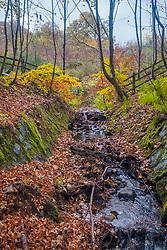 Loch Fiskally Autumnal Colours.<br /> Neil Bain   EEm 4th November 2017