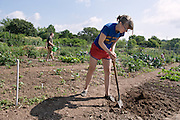 Molly Marckel, a junior urban Planning Major, right, works in the garden, prepares to plant edibe wild flowers, Thursday.
