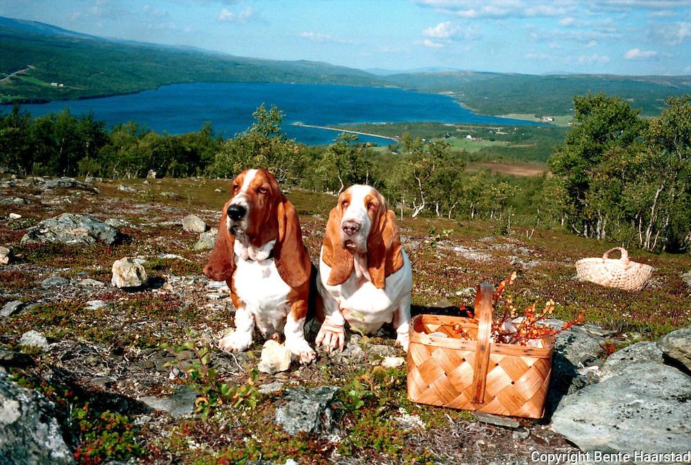 Stugudal med Stugusjøen i bakgrunnen. Basset Hound Ruth og Watson.neg