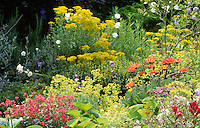 dense planting in a summer bed