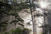 WA14560-00...WASHINGTON - Sun light streaking through the trees along Rialito Beach in Olympic National Park.
