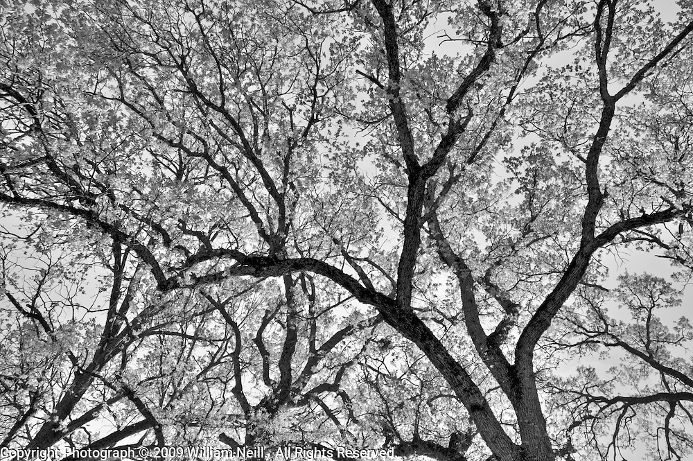 Spring Oaks, Ahwahnee, California