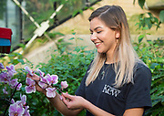 Jenny Forgie - an Orchid specialist - looks at some of the flowers. <br /> <br /> Thai Orchid Festival at Kew Gardens, London, Great Britain <br /> 8ths h February 2018 <br /> <br /> A celebration of Thailand's vibrant colours, culture, and magnificent plant life.<br /> <br /> Thousands of orchids and tropical plants exploding with colour in stunning displays <br /> The perfect ways to beat the winter blues, in a hot and balmy glasshouse <br /> The festival runs from Saturday 10 February to Sunday 11 March 2018<br /> <br /> <br /> Kew staff in action putting the finishing touches to the stunning horticultural displays – on ladders, in the ponds and walking<br /> <br /> An exquisite 4 metre Bang Pa-In-inspired palace rises from the central pond covered in pink, yellow and orange orchids <br /> <br /> A larger than life water dragon covered in bright orchids <br /> <br /> Models wandering through the colourful Vanda tunnel <br /> <br /> Beautifully handcrafted floating Thai umbrellas and traditional gold carts on loan from the Thai embassy <br /> <br /> A traditional Thai market boat and rice paddy floating in a pond, covered in yellow and white orchids<br /> <br /> Photograph by Elliott Franks
