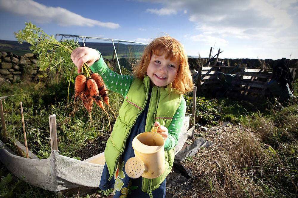 Growing carrots on an allotment in Heptonstall - images of Rural Europe - EU Project