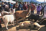 ECUADOR, MARKETS Otavalo produce and crafts market