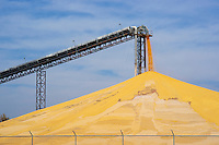 Conveyor and a large stockpile of harvested corn, Nebraska, USA.