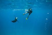 A seal in blue ocean posing for a freediver. Nearby Floreana Island, Galapagos | En sel i blått hav poserer villig for en fridykker. I nærheten av øya Floreana, Galapagos.