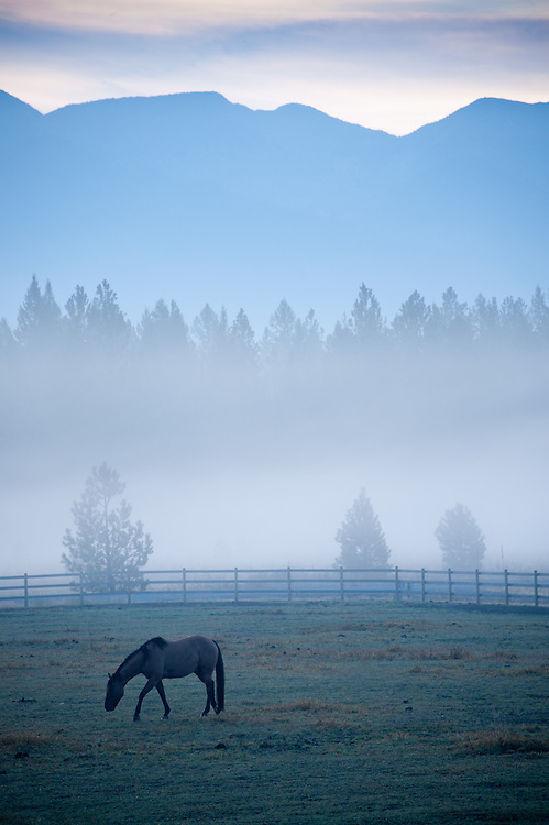 Early morning mist on a farm looking towards the Swan Mountains with a horse in the foreground
