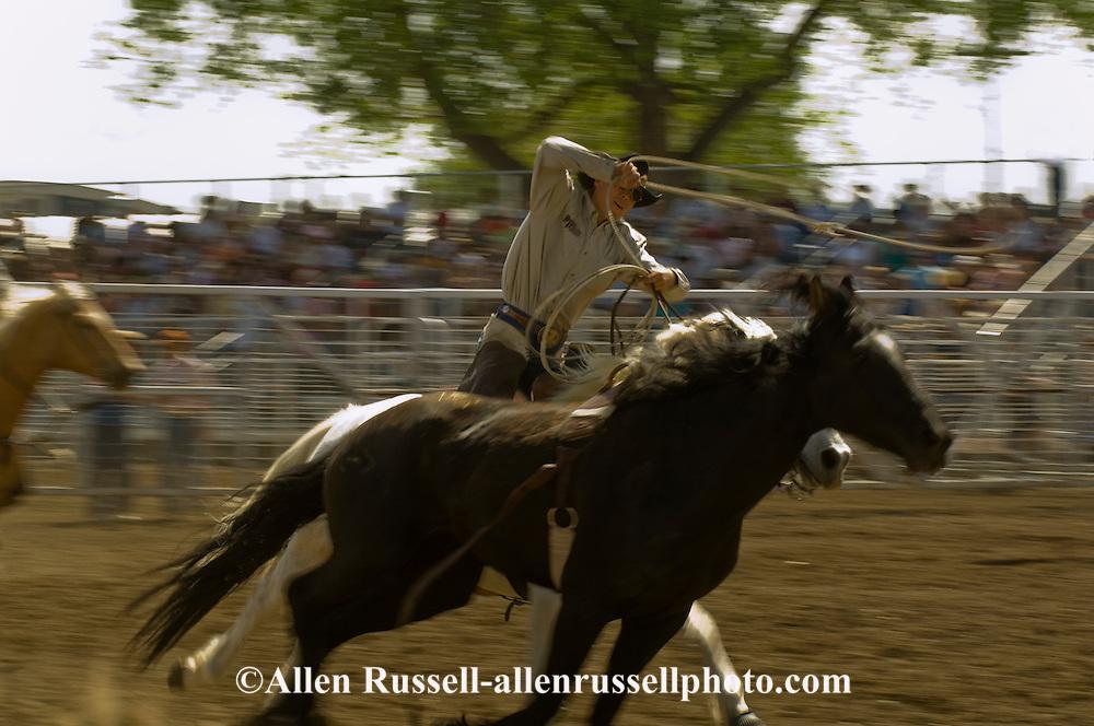 Pickup man Jay Shaw ropes bareback bronc, Miles City Bucking Horse Sale, Montana, <br /> MODEL RELEASED