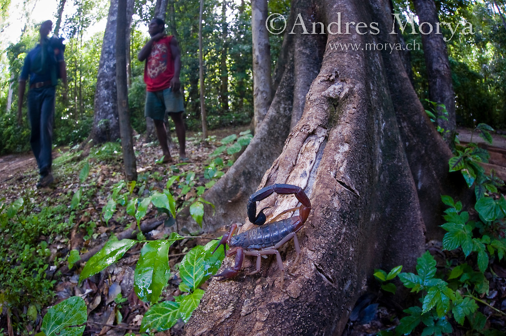 Préférence people-madagascar-ankarana-7.tif | Andres Morya Photography TA12