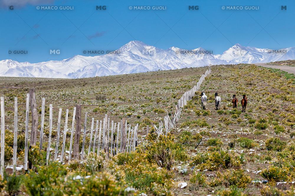 ESTEPA, ALAMBRADO Y CABALLOS AL GALOPE, RUTA 150 CAMINO A DIQUE AGUA DEL TORO, CORDILLERA DE LOS ANDES CON NIEVE AL FONDO, SAN RAFAEL, PROVINCIA DE MENDOZA, ARGENTINA  (PHOTO © MARCO GUOLI - ALL RIGHTS RESERVED)