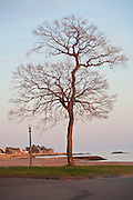 Bare tree against blue sky by the ocean at dusk
