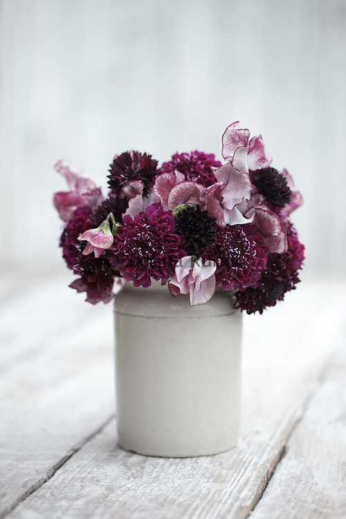 Flower arrangement with scabious, sweet pea 'Wiltshire Ripple' and cornflower 'Black Ball'