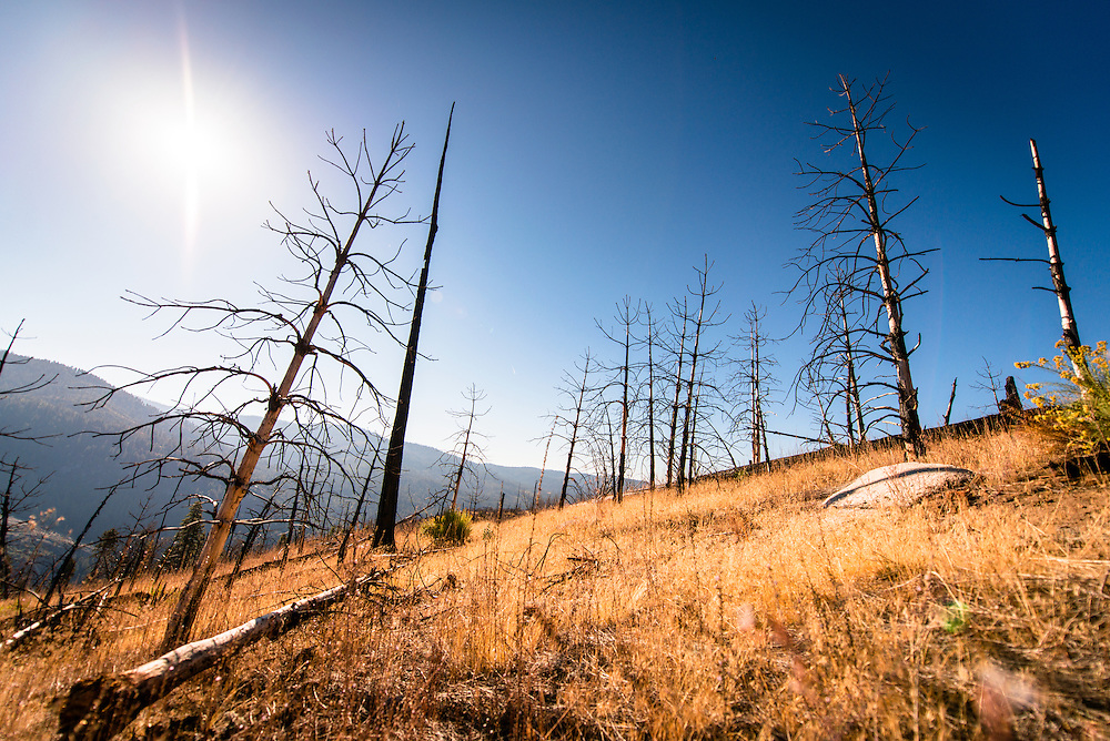 Old Forest Fire regrowth in Yosemite