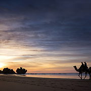 Camels walking along the sand with the setting sun at Essaouira, Morocco