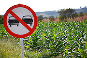 Patos de Minas_MG, Brasil.<br /> <br /> Plantacao de fumo em Patos de Minas, Minas Gerais.<br /> <br /> Tobacco plantation in Patos de Minas, Minas Gerais.<br /> <br /> Foto: LEO DRUMOND / AGENCIA NITRO