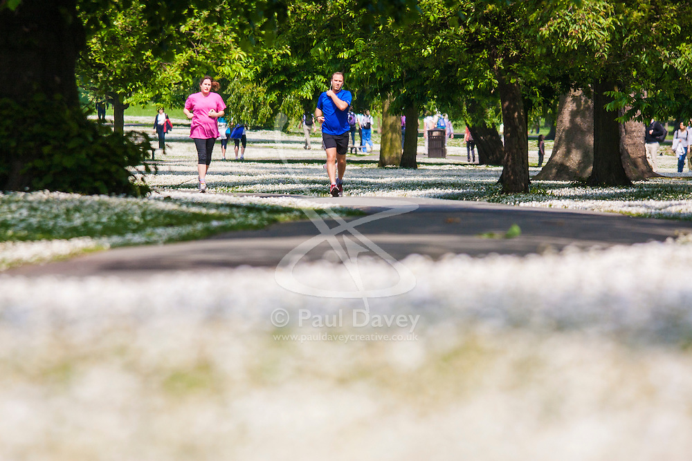 Regent's Park, London, May 17th 2014. Runners make their way through springtime  Regent's Park in London where the lawns are carpeted with daisies.