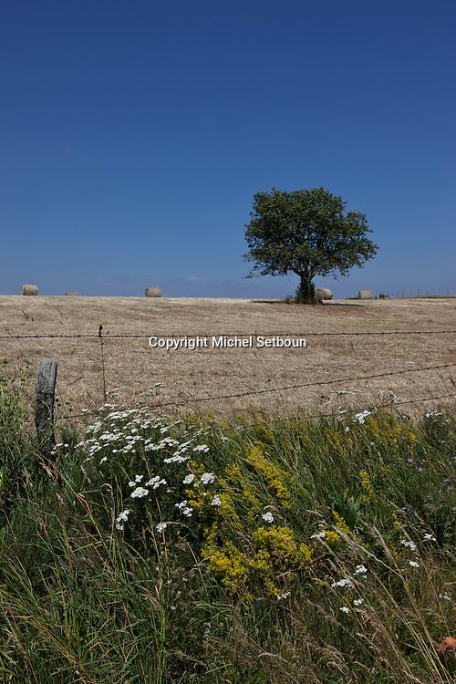 landscape of aubrac after the harvest, france  /  paysage de  l aubrac apres la moisson , France