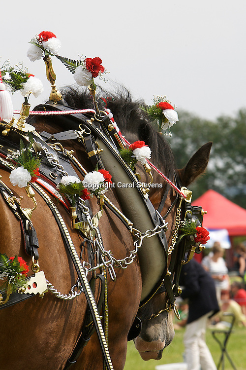 Heavy Horses at Weeton Show 2011<br /> Rex Whiteoak and Bess