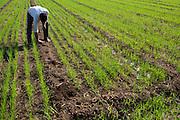 Shantilal on his farm in Madhya Pradesh, India.