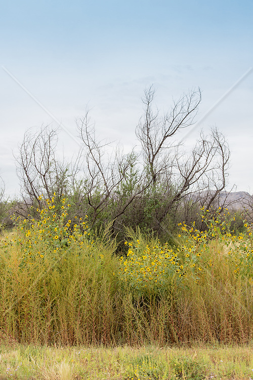 plants in a New Mexico landscape