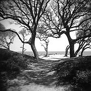 Jekyll Island - Georgia - Holga 120/Ilford Film