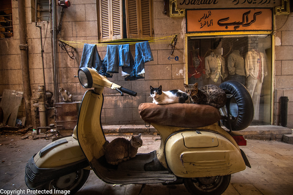 Cats sleeping on Vespa scooter in a Cairo alley, Egypt