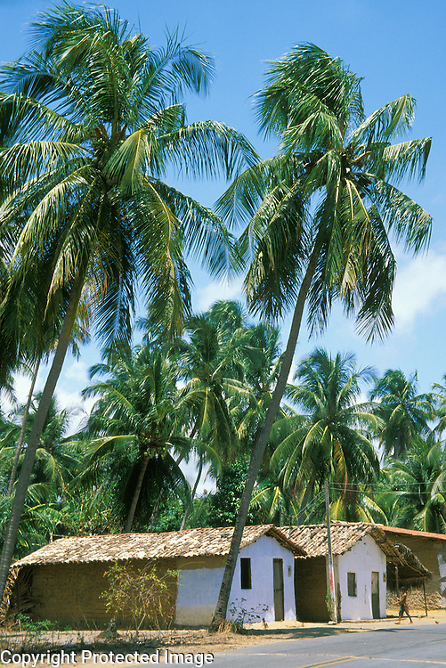 Roadside village houses with coconut trees, Porto de Pedras, Alagoas, Brazil.
