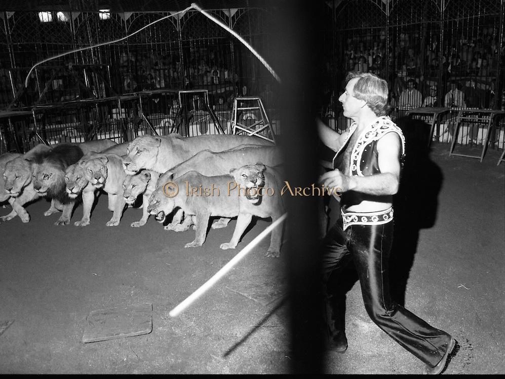 08.09.1984<br /> 09.08.1984.<br /> 8th September 1984.<br /> Chipperfield's circus performed before packed houses in Mullingar, Co Westmeath.<br /> <br /> Picture of Mr Richard Chipperfield,cracking the whip, as he leads his pride of lions through their routine.The pride is made up of both lions and lionesses.