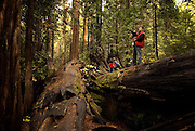 A family explores Big Trees State Park, one of the Sierra Nevada's protected groves of giant sequoias.