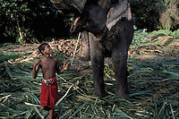 In the deep Sri Lankan jungle Athulla is a 15-year old boy who wants to become a mahout (or mahut) aka elephant-keeper. Ananda his master teaches him all the tricks of the trade to become a good mahout. They work with Rani a 32 year old female. Kodachrome. Story shot on assignment for the National Geographic France.