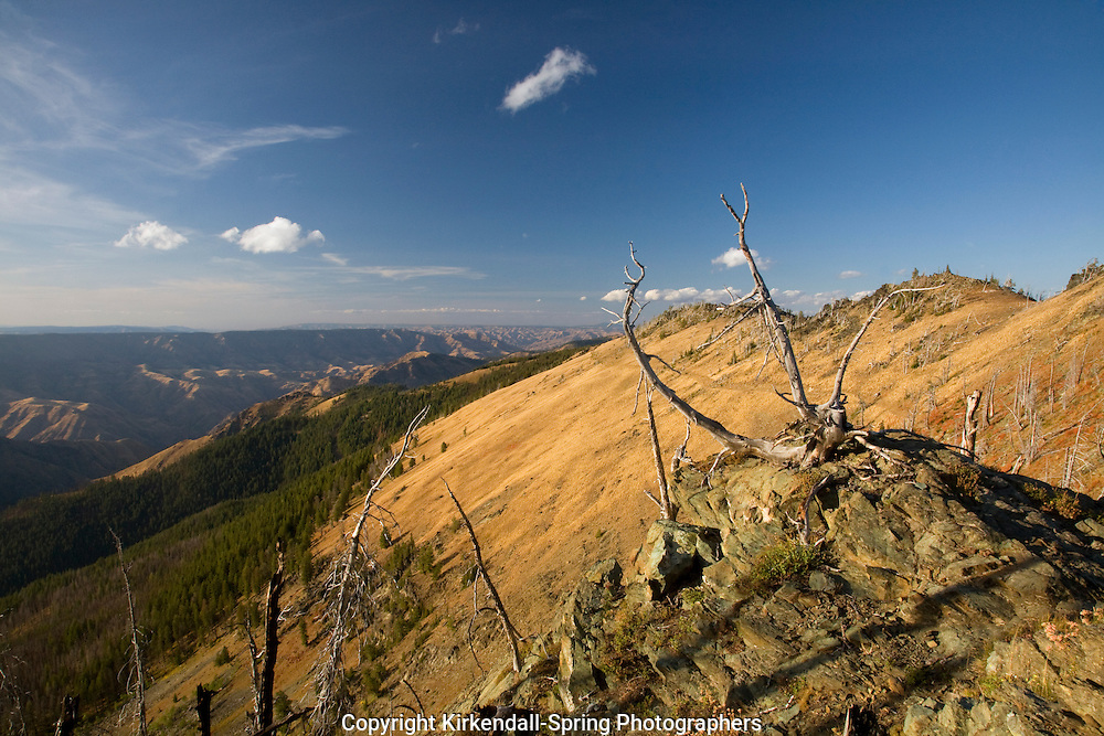 ID00111-00...IDAHO - The Boise Trail #101 north of Windy Saddle and Heavens Gate Lookout with views over Hells Canyon.