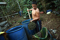 A worker shovels out coca leaf after it has been fully used during the process to turn coca leaf into coca paste at a lab, in a remote area of the southern Colombian state of Nariño, on Monday, June 25, 2007. (Photo/Scott Dalton)