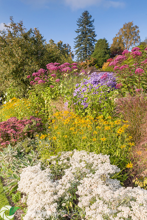Colouful herbaceous borders in the Walled Garden at Holehird Gardens, Cumbria, photographed in October. Planting includes Eupatorium purpureum, Rudbeckias, Sedums and Asters