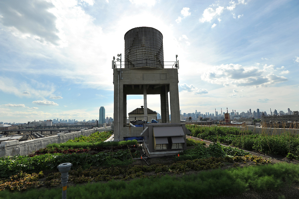 Brooklyn Grange: Additional shots for timeline Brooklyn Grange
