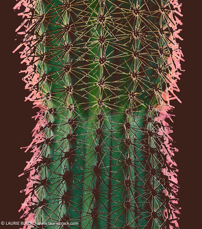 """Prickly Lady"" botanical photo"