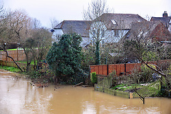 © Licensed to London News Pictures. 04/01/2016<br /> Kent flooding alert (04.01.2016) <br /> The river Beult in Yaldiing, Kent.  <br />  A dozen areas of Kent has been put on flood alert by The Environment Agency.  This includes river Medway,Beult and Teise.<br /> <br /> (Byline:Grant Falvey/LNP)