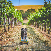 LVWA Wine and Wags Event