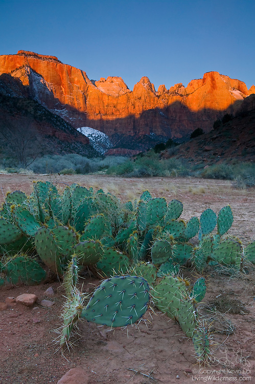 The peaks of Zion National Park, Utah, tower over the valley and prickly pear cactus below. From left to right, the main peaks visible here are the West Temple, Sundial, and Altar of Sacrifice. The West Temple is the tallest at 7,810 feet.