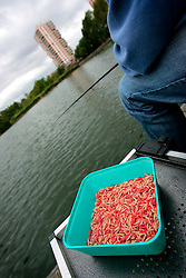 UK ENGLAND LONDON 10AUG06 - Close up of maggot bait used at the Thames 21 Angling Development Project at Canada Water Dock, London seeks to introduce and involve inner-city children with angling around various locations in London.. . jre/Photo by Jiri Rezac. . © Jiri Rezac 2006. . Contact: +44 (0) 7050 110 417. Mobile:  +44 (0) 7801 337 683. Office:  +44 (0) 20 8968 9635. . Email:   jiri@jirirezac.com. Web:    www.jirirezac.com. . © All images Jiri Rezac 2006 - All rights reserved.