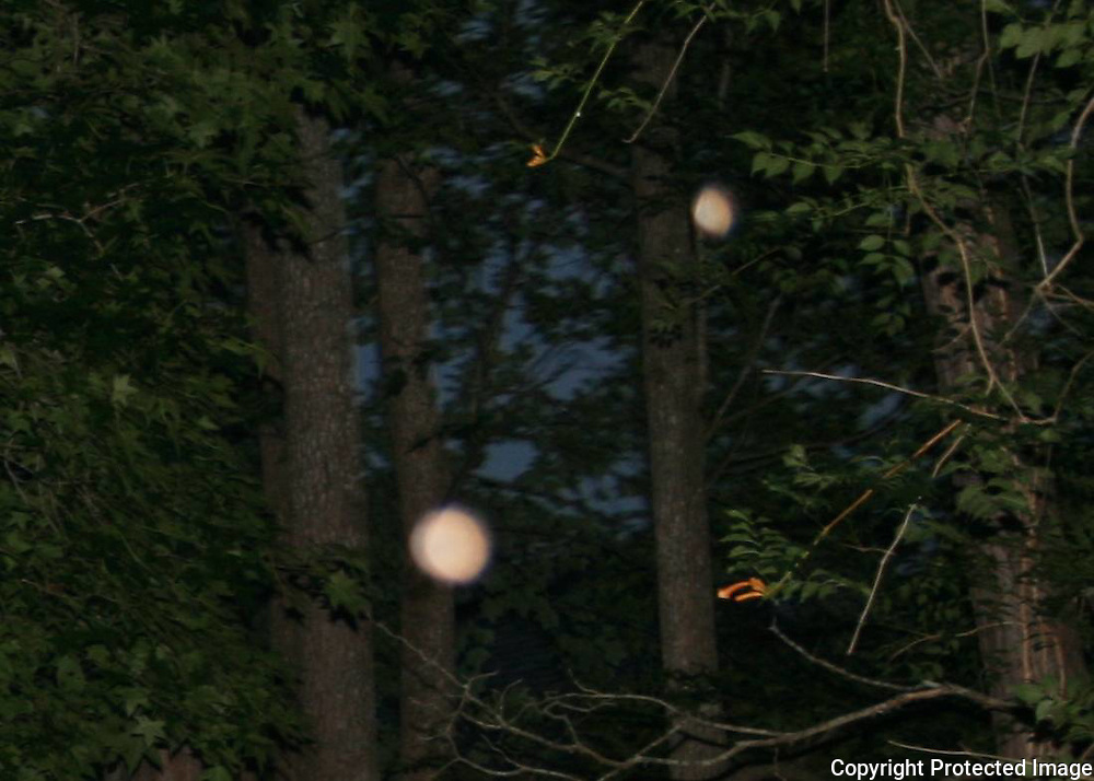 A beautiful pink orb and a partially formed salmon colored orb floating up in trees near a trumpet vine at dark.