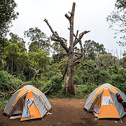A pair of tents at Big Tree Camp (formally known as Forest Camp) on the first night of a climb up Mount Kilimanjaro along the Lemosho Route.