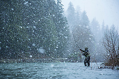 Quinault River Steelhead