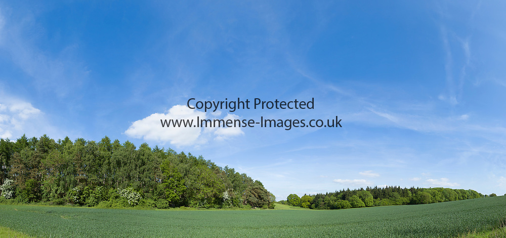Green planted crop fields with trees behind and blue sky