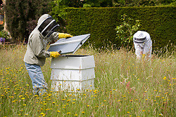 Bee keepers collecting honey from the hives in the orchard at Sissinghurst Castle Garden